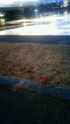 秋の忘れもの